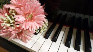 鍵盤上のガーベラ