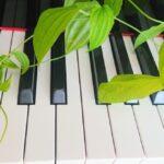 鍵盤と植物