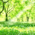 明るい森の中